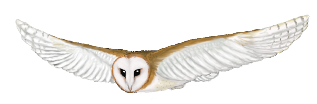 Clipart images of a barn owl graphic freeuse library Free Cartoon Barn Owl, Download Free Clip Art, Free Clip Art on ... graphic freeuse library