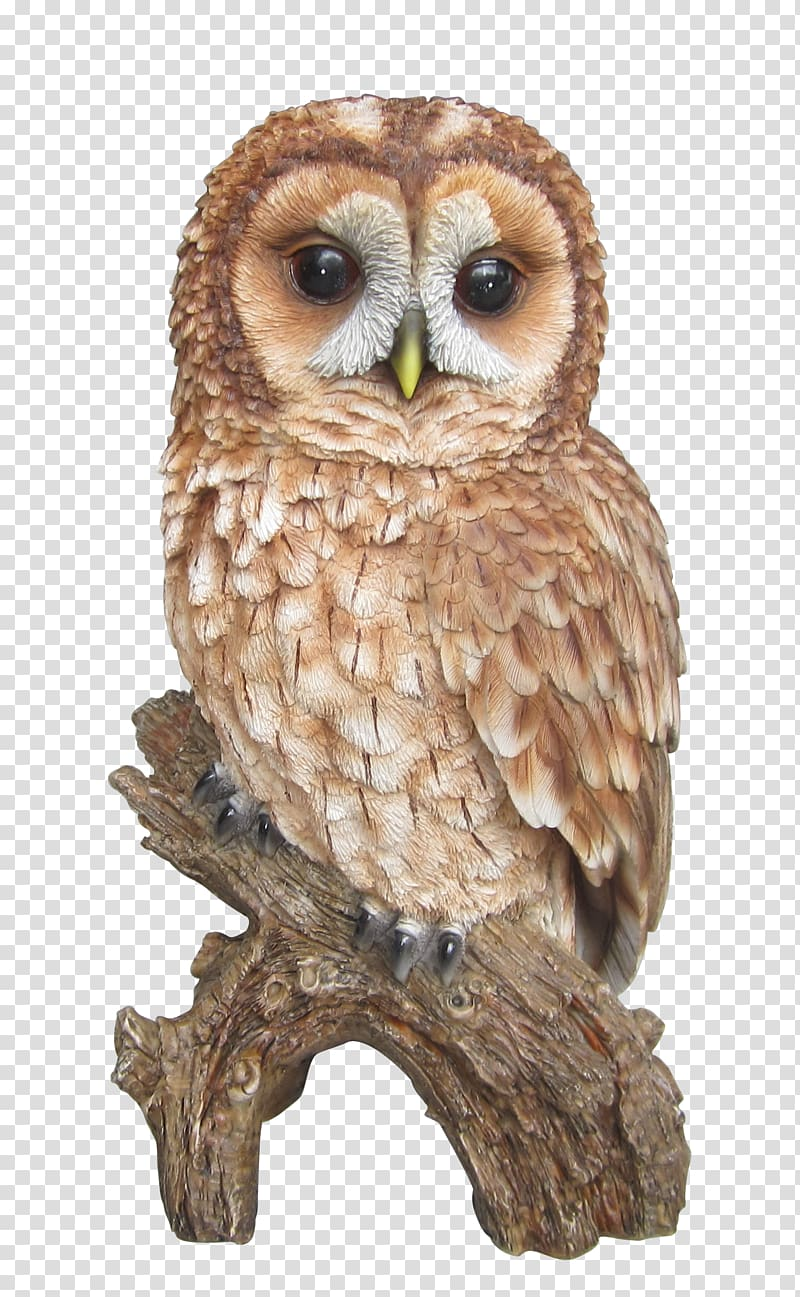 Clipart images of a barn owl image free download Brown owl illustration, Tawny owl Barn owl Barred Owl , tawny ... image free download