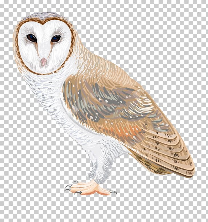 Clipart images of a barn owl picture transparent stock Barn Owl Drawing PNG, Clipart, Animals, Barn, Barn Owl, Beak, Bird ... picture transparent stock