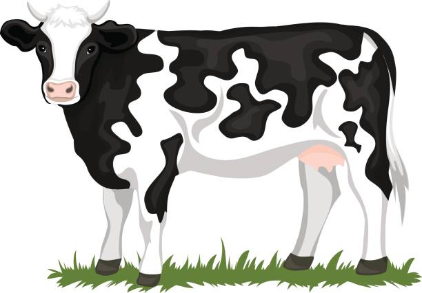 Clipart images of cow clip art transparent download Wondrous Cow Clipart Images Cute 42 Best Drawings Watercolor ... clip art transparent download