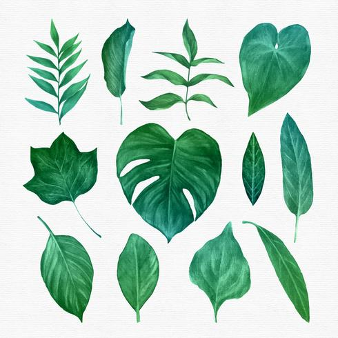 Clipart images of leaves banner royalty free Green Leaves Clipart Set Vector - Download Free Vector Art, Stock ... banner royalty free