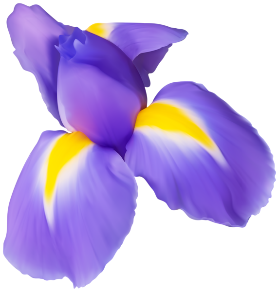 Iris flower clipart picture freeuse download Purple Iris Flower PNG Clip Art Image | Gallery Yopriceville - High ... picture freeuse download
