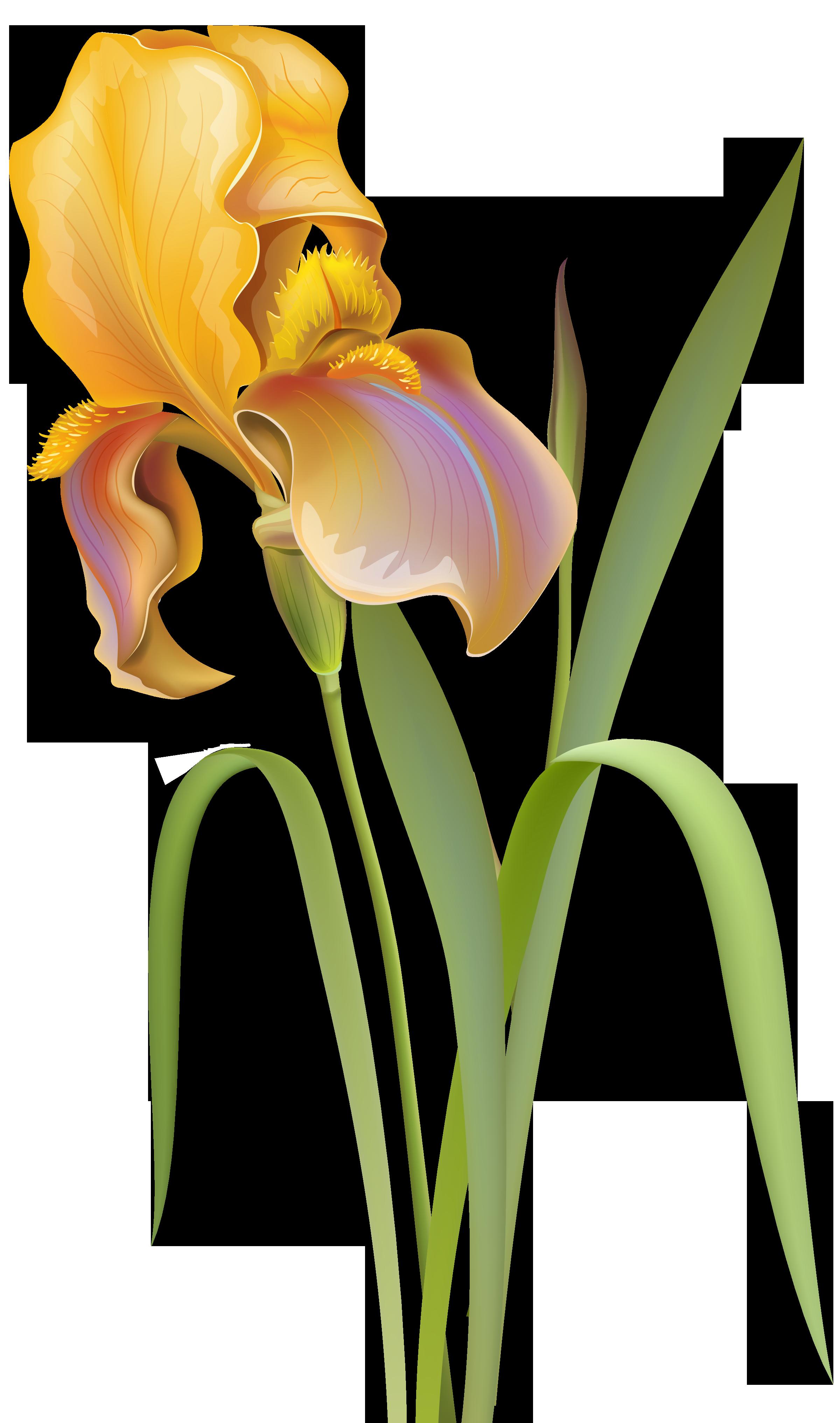 Flower clipart png transparent banner library download Iris Flower PNG Clip Art - Best WEB Clipart banner library download