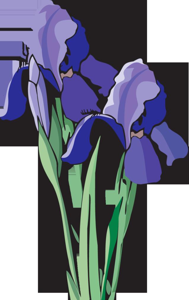 Iris flower clipart banner transparent stock Web Design & Development | Flower Images | Pinterest | Clip art ... banner transparent stock