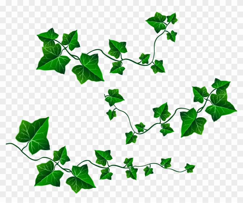Clipart ivy leaves banner royalty free Download Free png Ivy Leaf Clip Art Free Transparent PNG Clipart ... banner royalty free