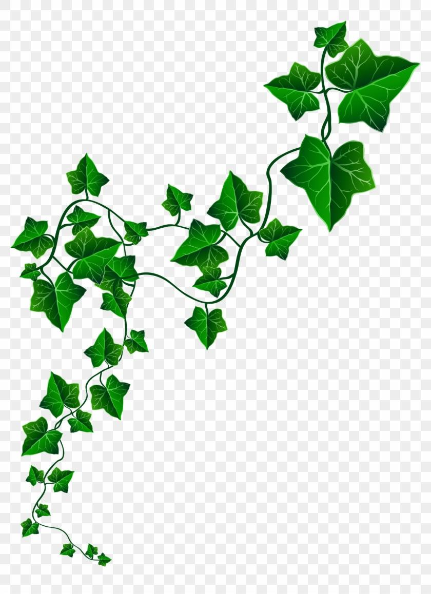Clipart ivy leaves jpg freeuse download Best Aka Ivy Leaf Clip Art Alpha Kappa Images jpg freeuse download