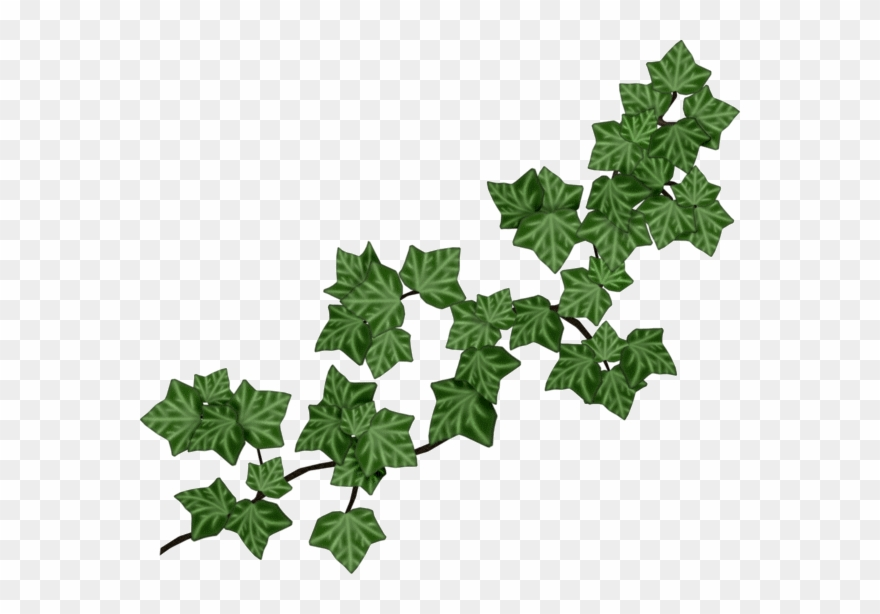 Clipart ivy leaves image freeuse download Joli Tube Yandex Disk, Clip Art, Leaves, Ivy, Tube, - Vines And ... image freeuse download