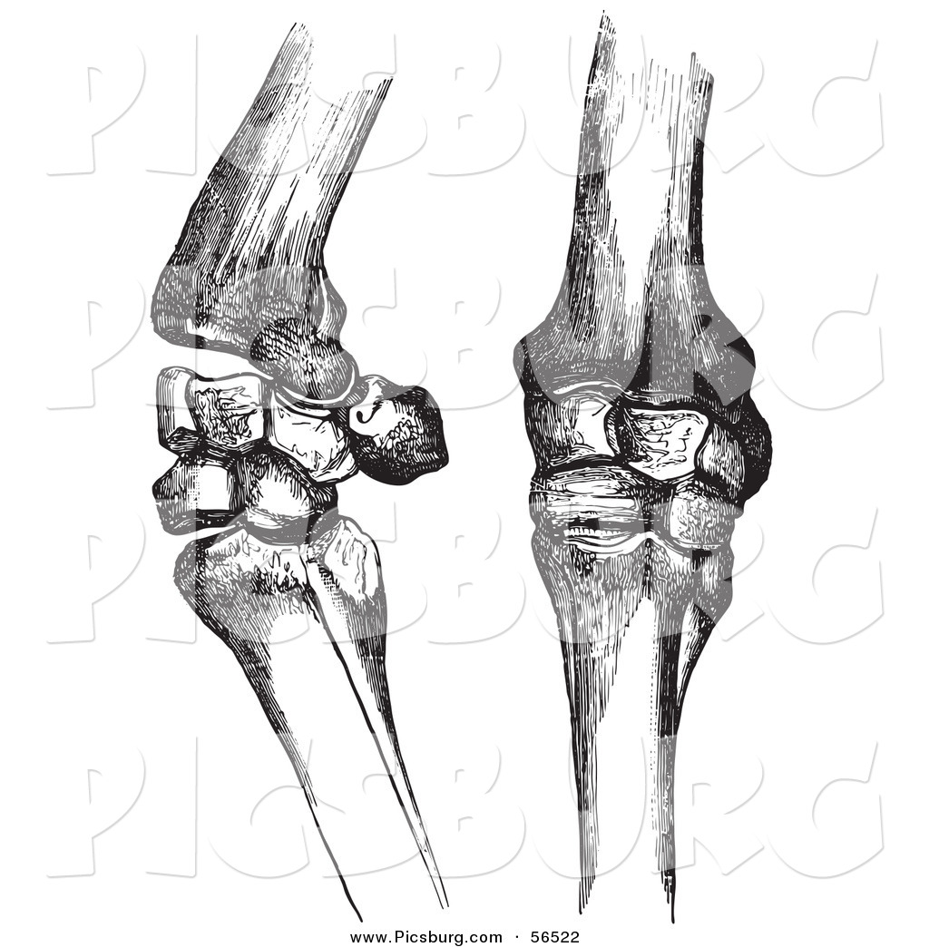 Clipart joints image library download Clip Art of Two Horse Knee Bones and Joints - Black and White by ... image library download