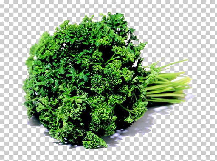 Clipart karpas royalty free library Parsley Leaf Vegetable Karpas Herb PNG, Clipart, Anise, Broccoli ... royalty free library