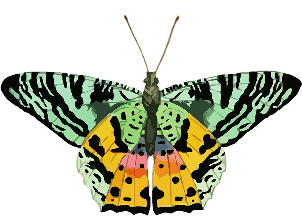Clipart kostenlos schmetterling png free Kostenlose Illustration: Schmetterling, Clipart, Bunte, Grün ... png free