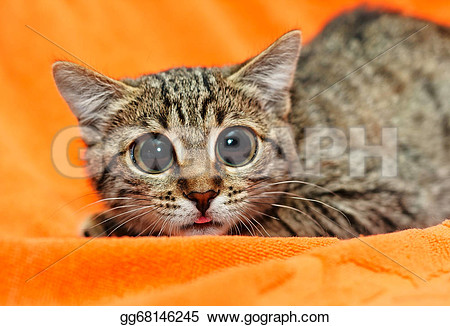 Clipart ktty with big eyes graphic transparent Cat big eyes clipart - ClipartFest graphic transparent