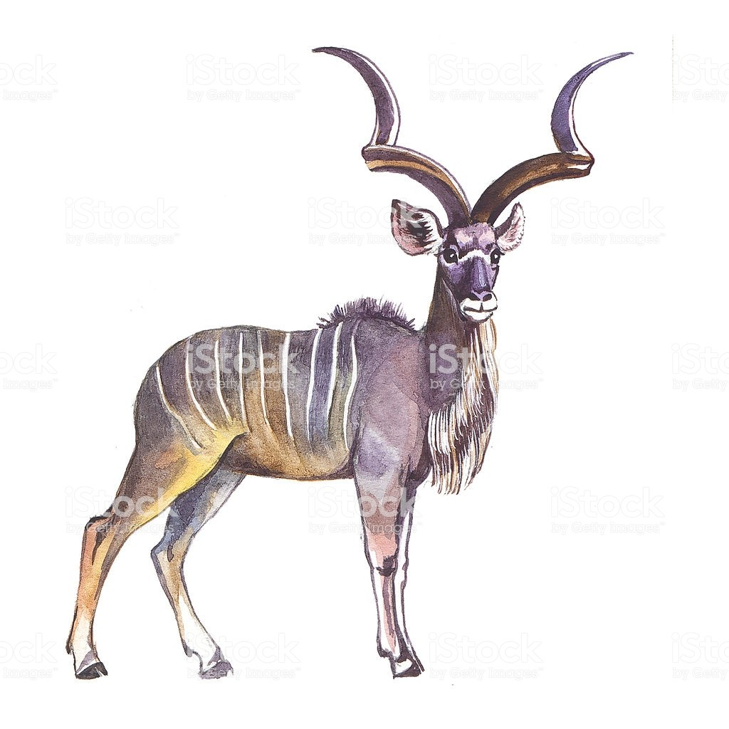 Clipart kudu png library stock Greater Kudu. Hand drawing watercolor. » Clipart Portal png library stock