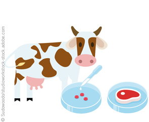 Clipart lab grown meat clipart stock Clean Meat: A Battle is Brewing over Labeling Lab-grown or Cultured Meat clipart stock