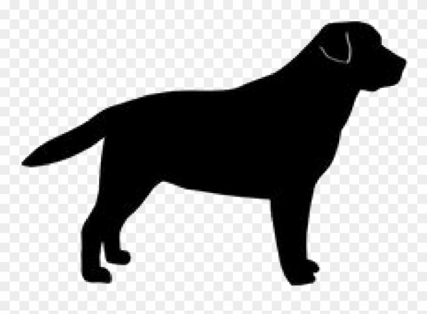 Clipart labador image royalty free download Golden Silhouette Labrador Breed Dog Retriever Clipart - Black Dog ... image royalty free download