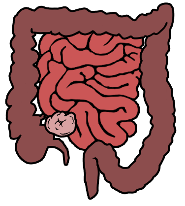 Clipart large intestines ith transpartent background black and white download Intestine clipart clipart images gallery for free download | MyReal ... black and white download