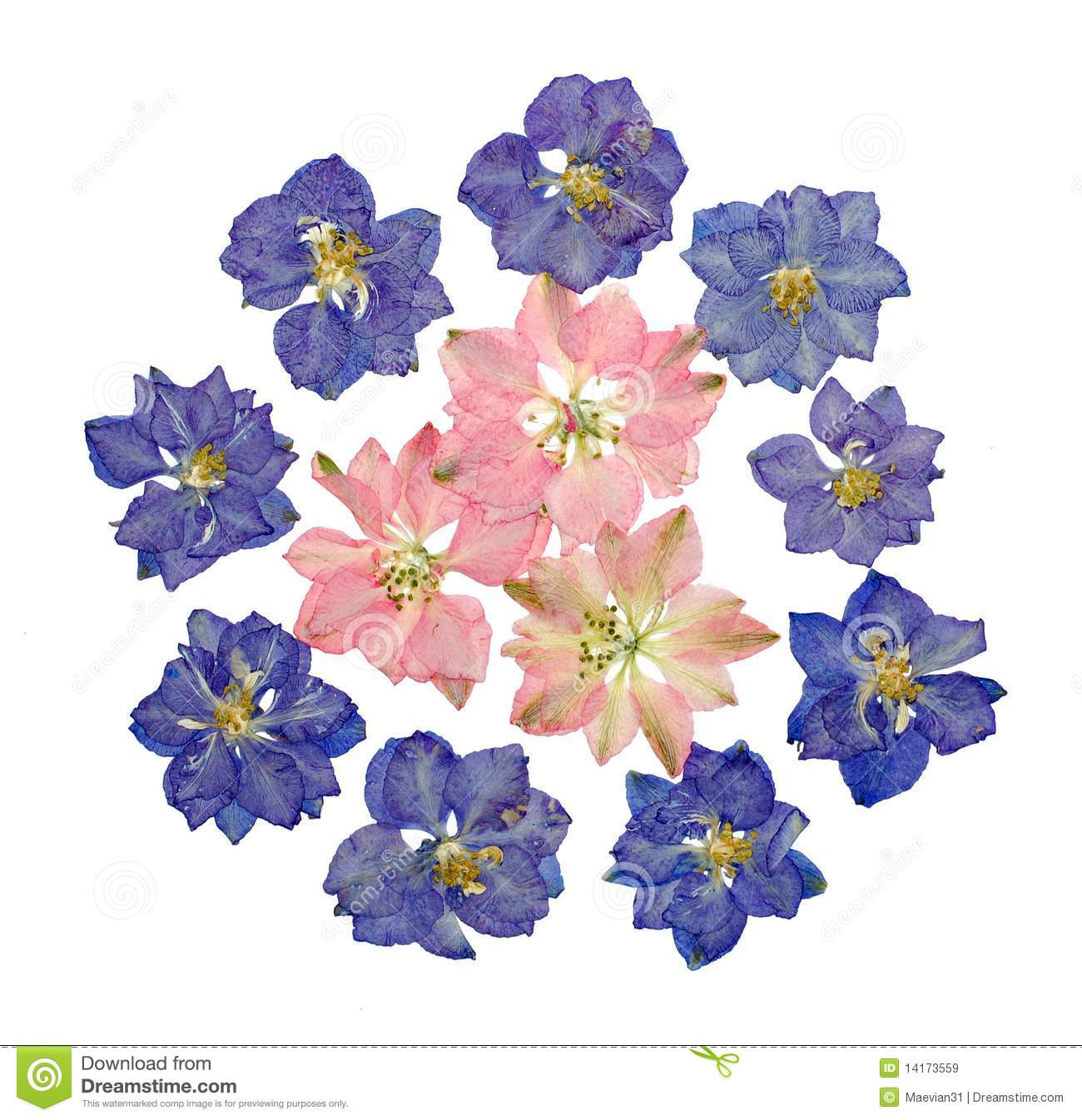 Clipart larkspurflowers vector royalty free library Collection of 14 free Flower clipart larkspur bill clipart dollar ... vector royalty free library