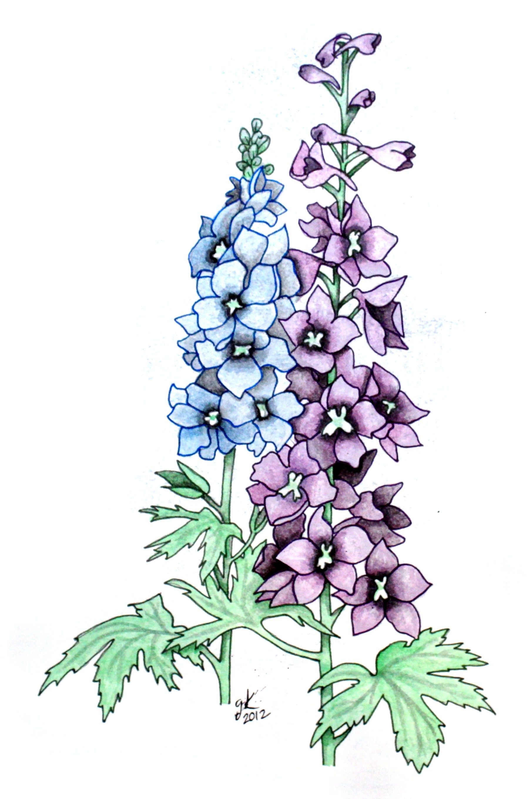 Clipart larkspurflowers jpg freeuse stock Larkspur Flower Drawing at PaintingValley.com | Explore collection ... jpg freeuse stock