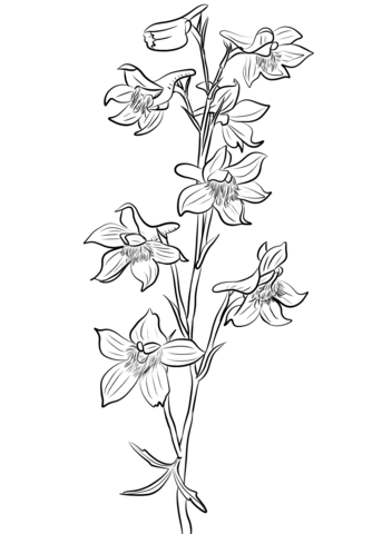 Clipart larkspurflowers png royalty free Larkspur Drawing at PaintingValley.com | Explore collection of ... png royalty free