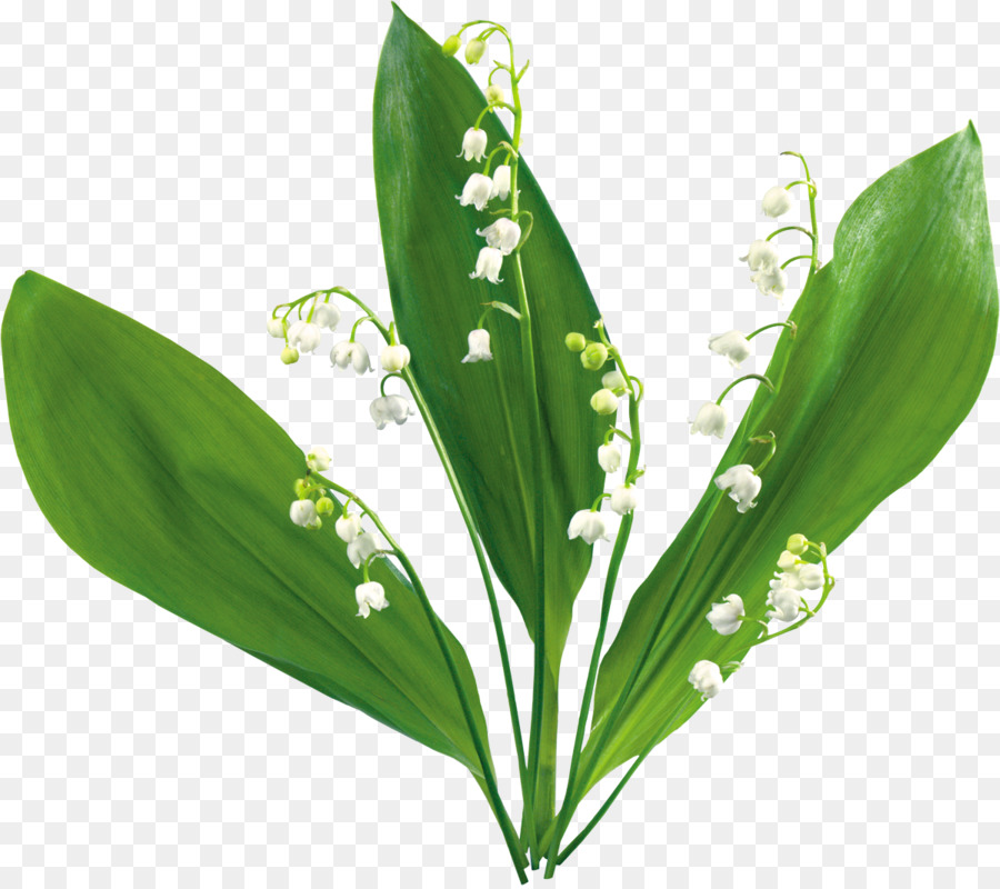 Lilly of the valley clipart clip art royalty free Lily Flower Cartoon png download - 1200*1063 - Free Transparent ... clip art royalty free