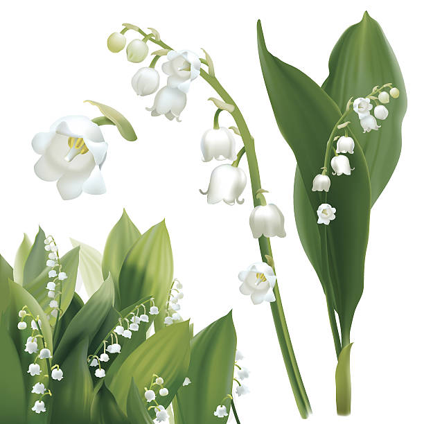 Lilies of the valley clipart picture freeuse library 63+ Lily Of The Valley Clipart | ClipartLook picture freeuse library