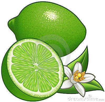 Clipart lime transparent download Lime clipart 5 » Clipart Station transparent download
