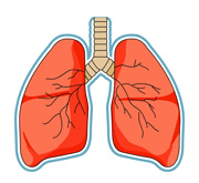 Clipart lung clip black and white Free Lungs Cliparts, Download Free Clip Art, Free Clip Art on ... clip black and white
