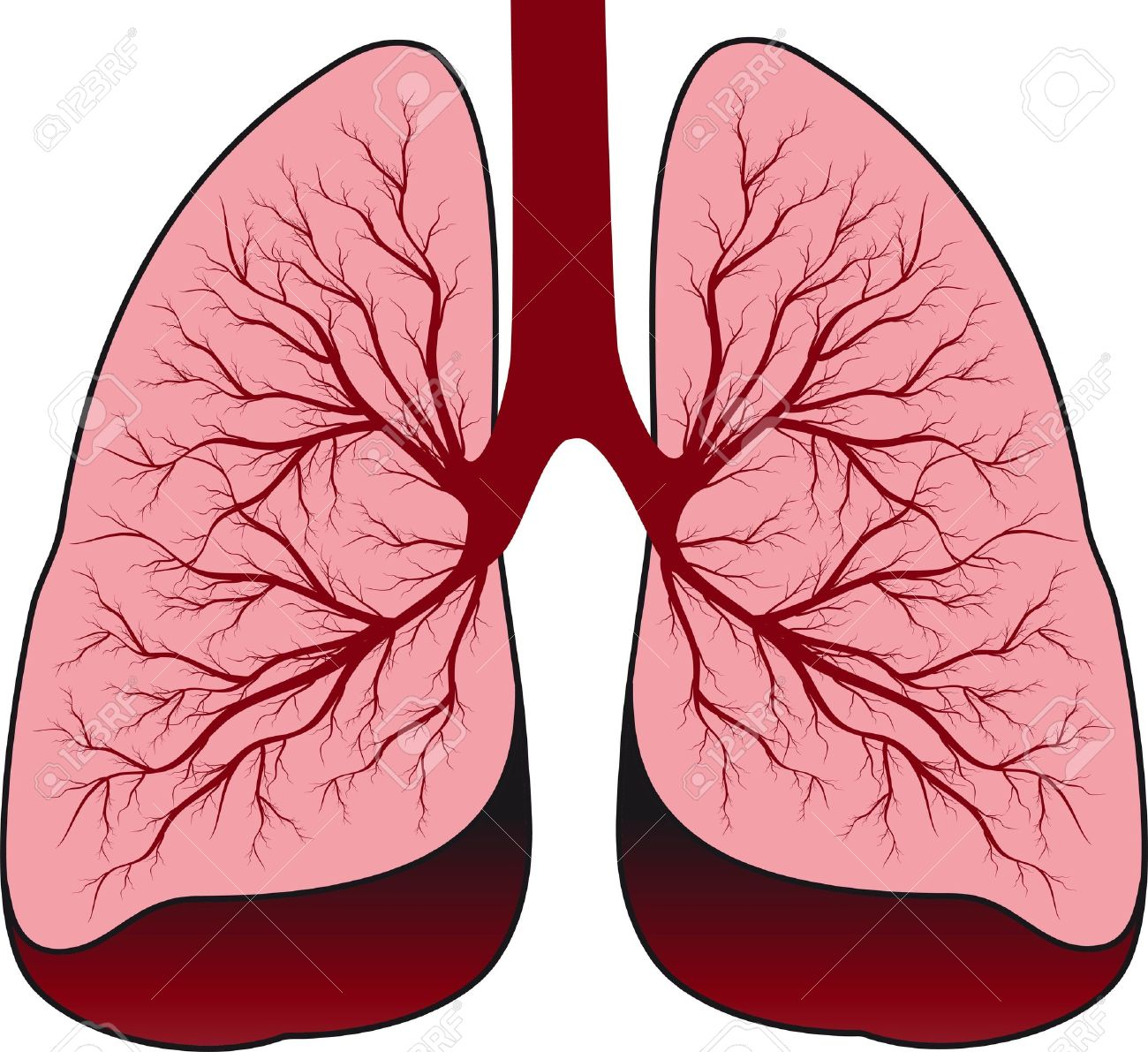 Clipart lung clip free download Lungs clipart detail - 67 transparent clip arts, images and pictures ... clip free download