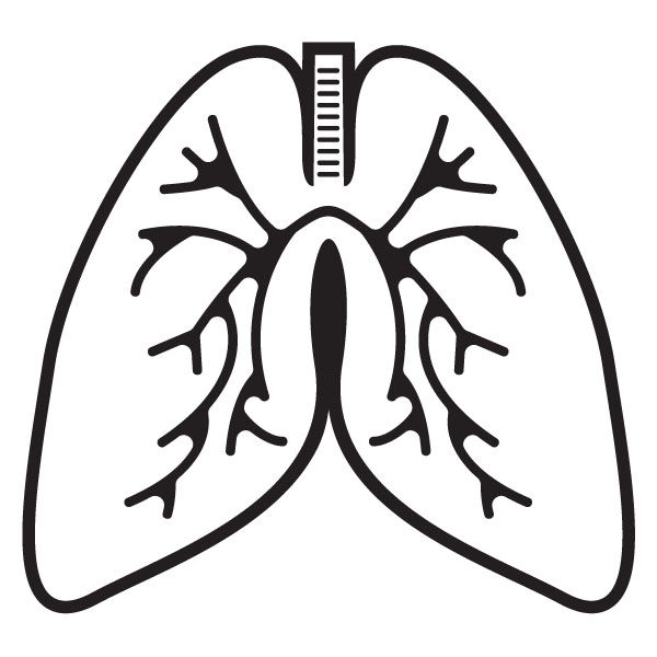 Clipart lung graphic free Free Lungs Cliparts, Download Free Clip Art, Free Clip Art on ... graphic free