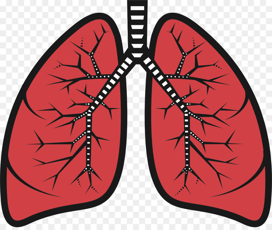 Clipart lung download Butterfly Cartoon clipart - Font, Butterfly, Graphics, transparent ... download