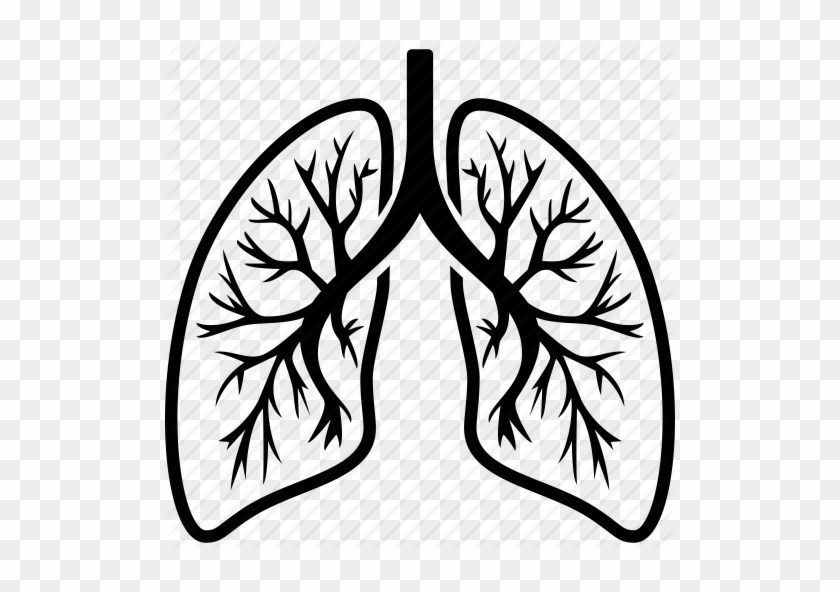 Lungs clipart image library library Lungs clipart png 4 » Clipart Portal image library library
