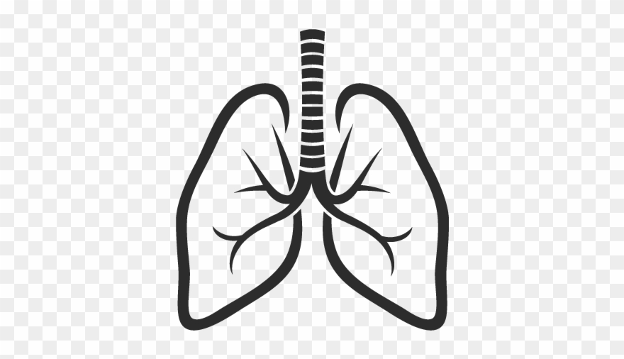 Lungs clipart image free download Lungs Icon - Lung Logo Clipart (#3295706) - PinClipart image free download
