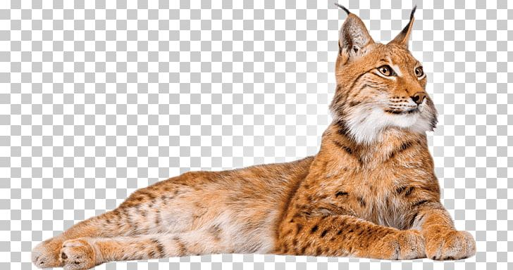 Clipart lynxes svg black and white download Lynx Lying Down PNG, Clipart, Animals, Lynxes Free PNG Download svg black and white download