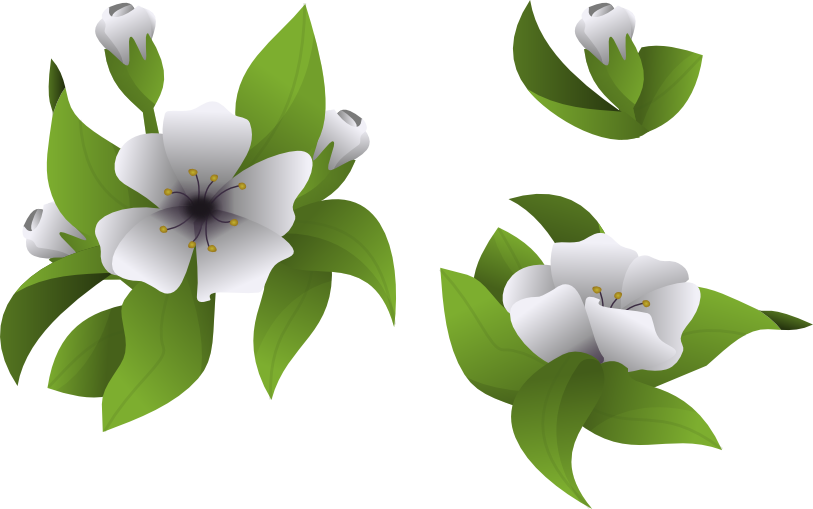 Clipart magnolia tree picture free download Fedora People - tatica.fedorapeople.org picture free download