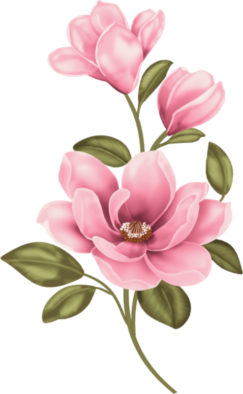 Magnolia flower clipart jpg transparent download 0_14dfa5_8d16ac42_orig (1).png | Pinterest | Decoupage, Flowers and ... jpg transparent download