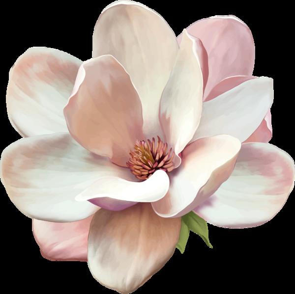 Magnolia flower clipart image transparent download Magnolia tattoo, signe de respect et de fidélité dans la durée ... image transparent download