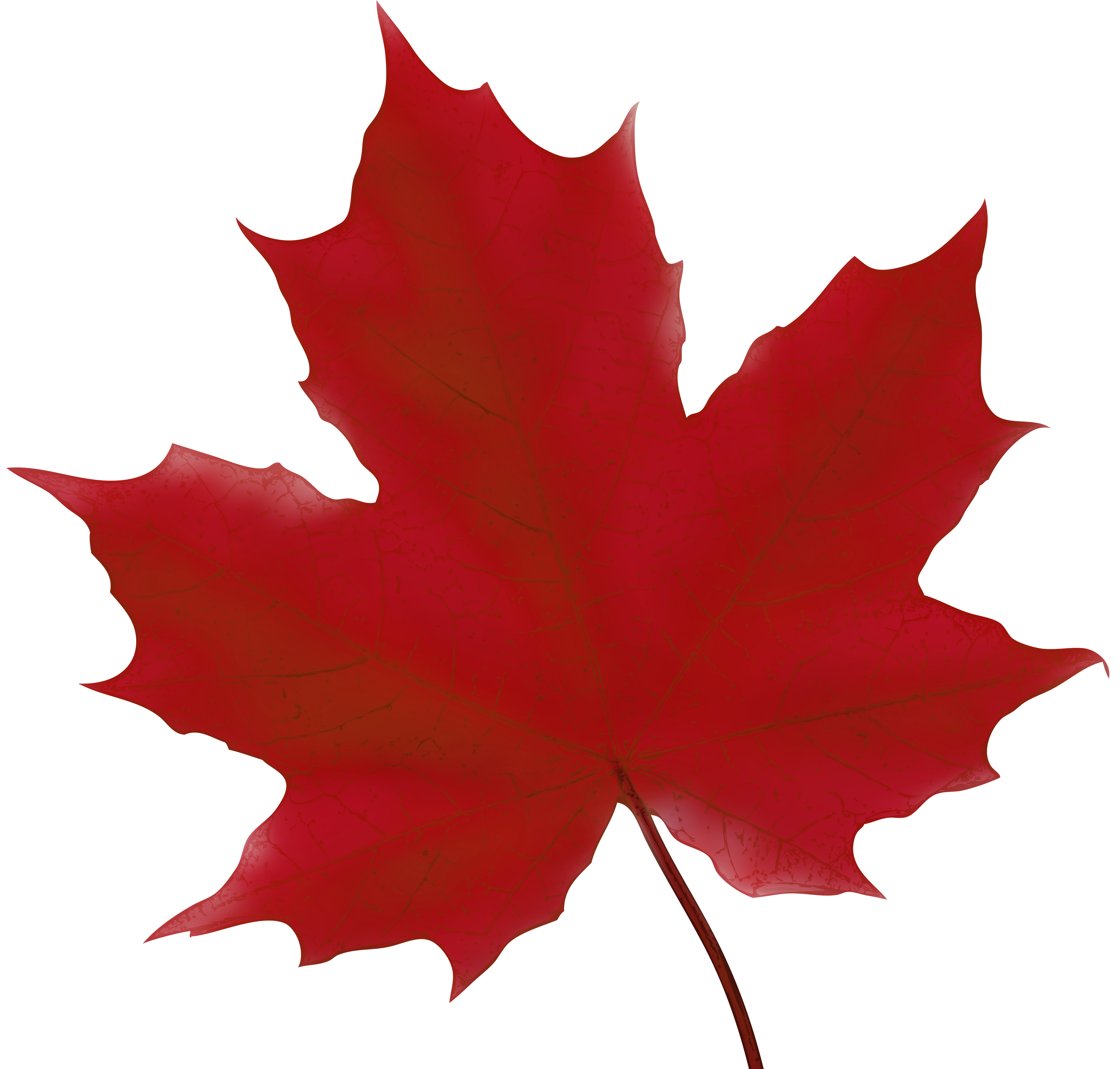 Red fall leaf clipart clipart free stock Maple Leaf Red PNG Clip Art Image | Gallery Yopriceville - High ... clipart free stock