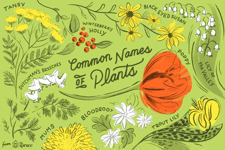 Clipart marajuana in an outdoor garden setting with hills clipart library download Database of Common Names of Plants clipart library download