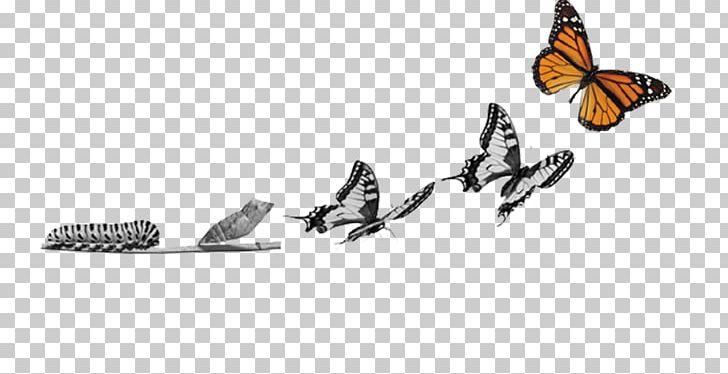 Clipart metamorphasis clip art black and white stock Butterfly Metamorphosis Caterpillar Insect Pupa PNG, Clipart, Angle ... clip art black and white stock