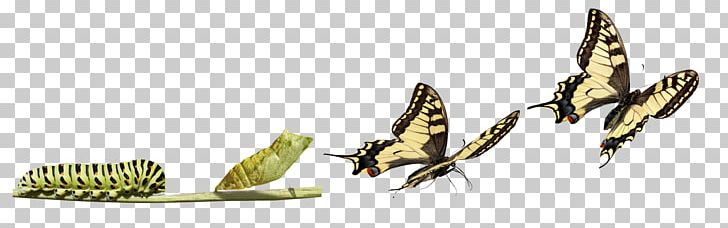 Clipart metamorphasis graphic transparent download Butterfly The Very Hungry Caterpillar Insect Metamorphosis PNG ... graphic transparent download