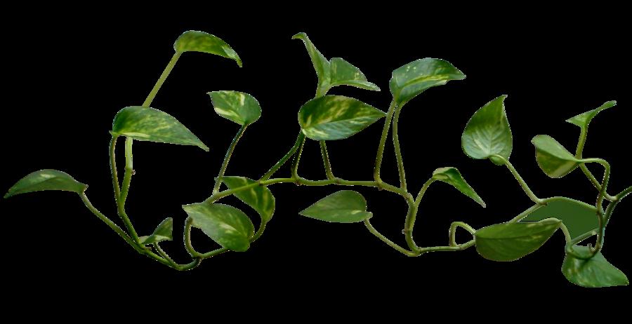 Clipart money tree svg freeuse download Leaf Vine | Free download best Leaf Vine on ClipArtMag.com svg freeuse download