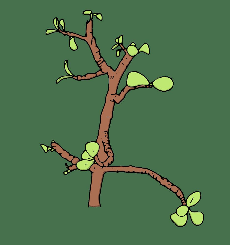 Clipart money tree jpg download Jade Money Tree - Rooweb Clipart jpg download