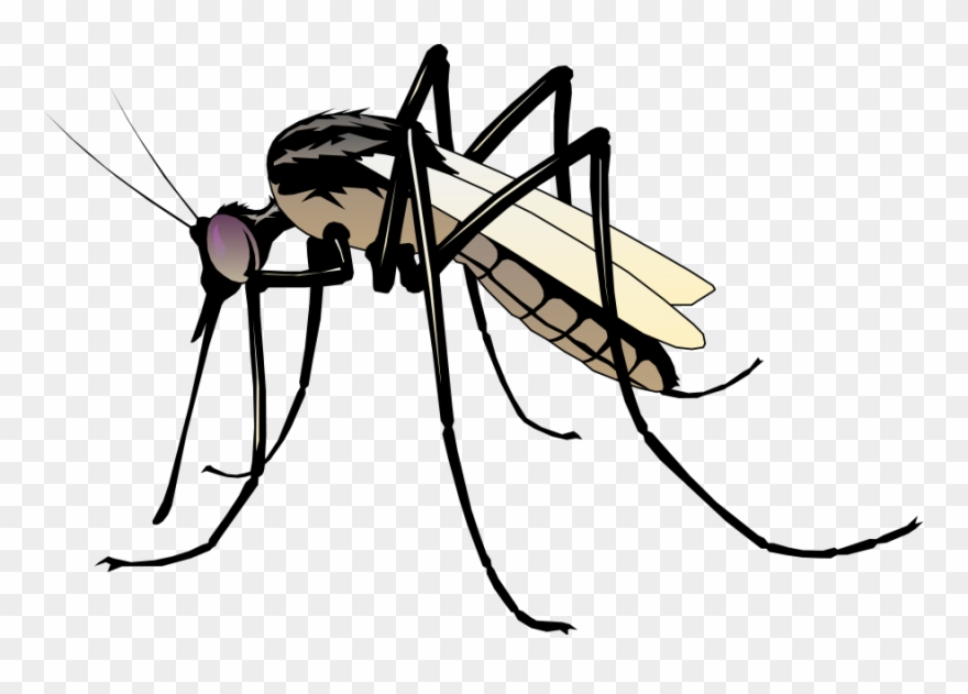 Clipart mosqueto clip art Insect 06 Free Vector 4vector - Clip Art Mosquito - Png Download ... clip art
