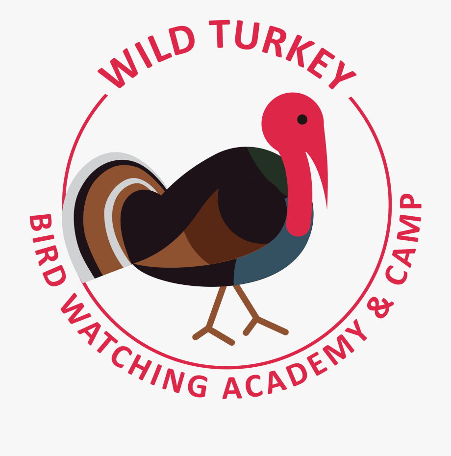 Clipart nwtf vector freeuse library Wild Turkey - Turkey , Transparent Cartoon, Free Cliparts ... vector freeuse library