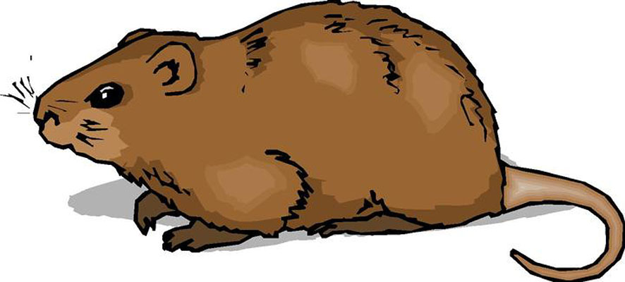 Clipart of a hamster banner free download Hamster Clipart | Clipart Panda - Free Clipart Images banner free download