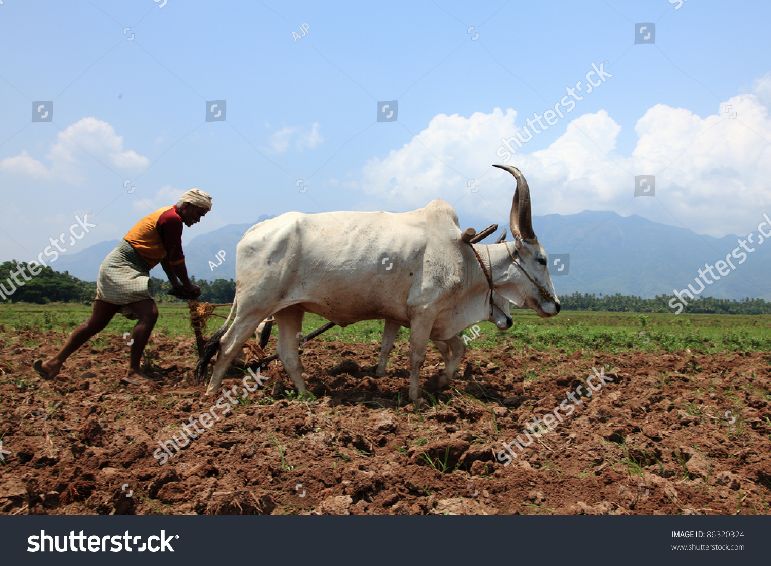 Clipart of a ox with a plow without a wip picture free stock Ox clipart agriculture indian - 43 transparent clip arts, images and ... picture free stock