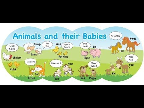 Clipart of animals and their young graphic black and white stock Animals and their Young Ones | Mother and baby animals ... graphic black and white stock