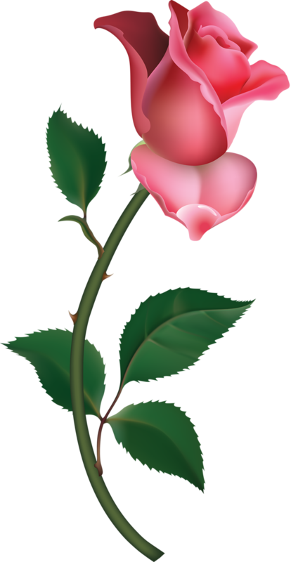 Large pink rose painting. Flower bud clipart black and white