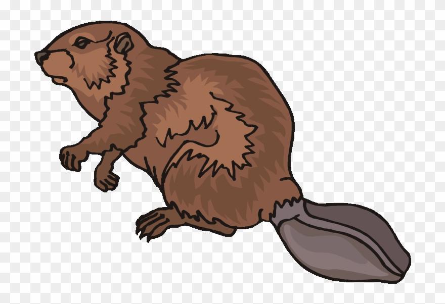 Clipart of beaver clipart Top 80 Beaver Clip Art - Beaver Clipart - Png Download (#1413031 ... clipart