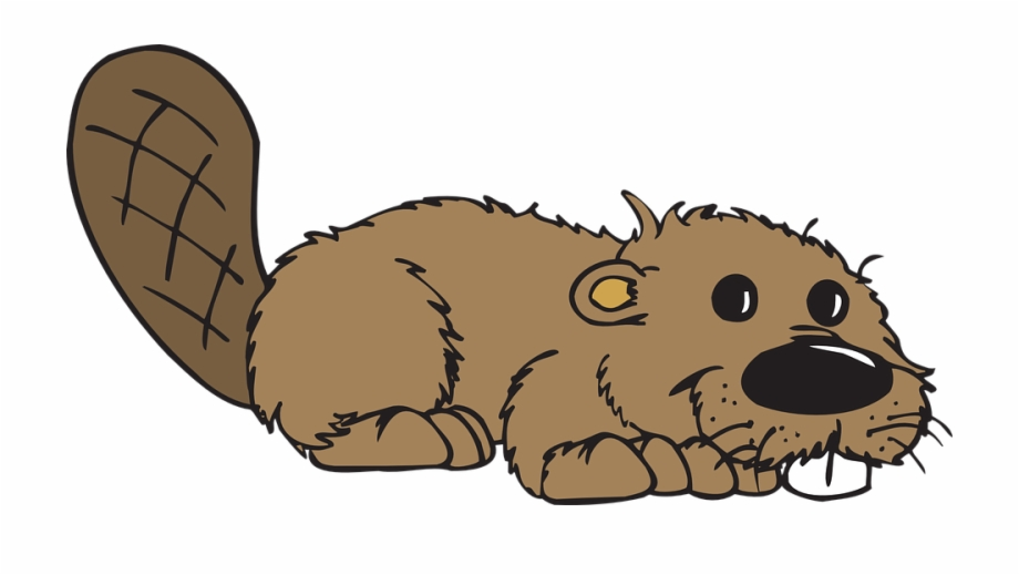 Clipart of beaver clip stock Beaver Animal Tail Teeth - Beavers Clipart Free PNG Images & Clipart ... clip stock