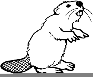Clipart of beaver clipart free stock Beaver Clipart & Look At Beaver HQ Clip Art Images - ClipartLook clipart free stock